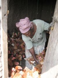 Kenia (39) – Kippen voor de horeca – sponsoren gezocht voor 3.370 euro