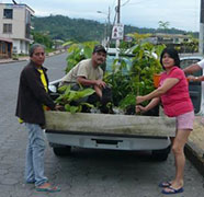Melania project: SISA botanische tuinen in de Amazone