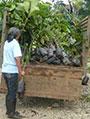 Project botanische tuinen Amazone