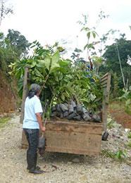 Melania project Amazone gebied