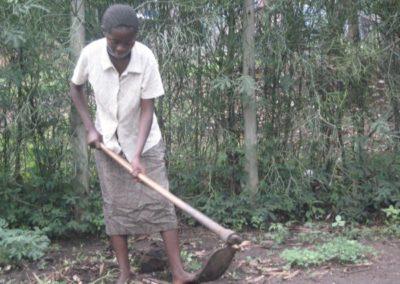 Uganda (76) – Varkens voor koffieboerinnen – geadopteerd door Jan de Bruin