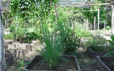 Ecologische landbouw voor Náhuatl Pipil vrouwen + familietuinen, LA-SV-10-E, El Salvador