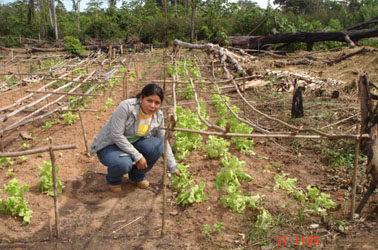 Natuurlijke medicijnen en gezondheidsproducten, LA-BR-9/R, Brazilië