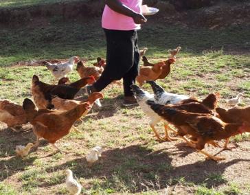 Oeganda (70) – Alfabetisering met kippen en varkens – geadopteerd door dhr H.N. Peltenburg, mw Van der Drift en individuele donateurs