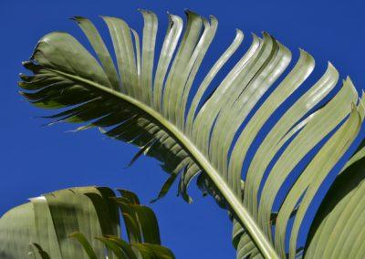 India (40) – Borden van bananenblad door alleenstaande vrouwen – geadopteerd door Melania Nootdorp, M. van den Berg en T. Mulder