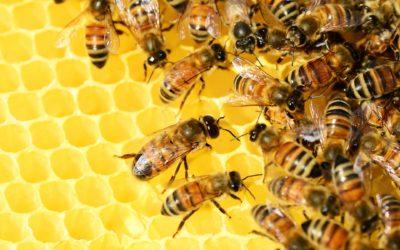 Bijenhouderij (Uganda)