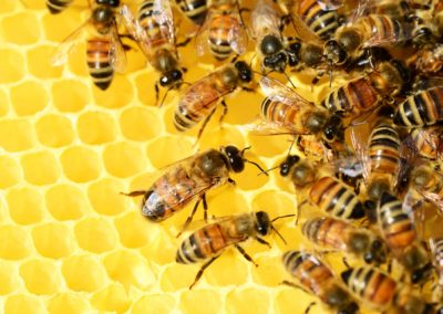 Uganda (66) – Bijenhouderij – gefinancierd uit de nalatenschap van mw. Terwijn