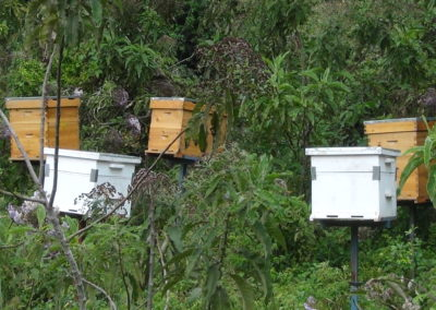 Kenia (23) – Bijenhouderij – geadopteerd door Jan de Bruin