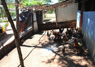 Kenia (28) – Kuikenboerderij – sponsoren gezocht voor 2.240 euro