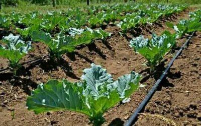 Irrigatie op zonne-energie