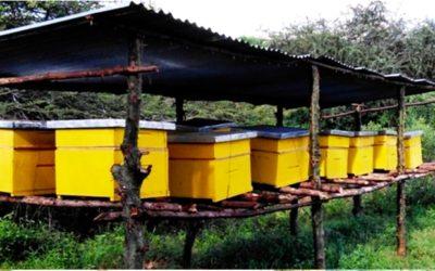 Bijenhouderij in Kenia