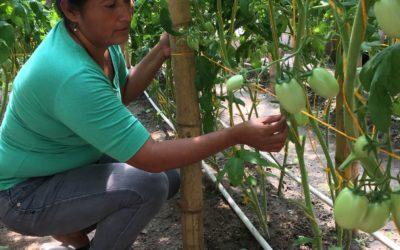 Kastuinbouw in El Salvador
